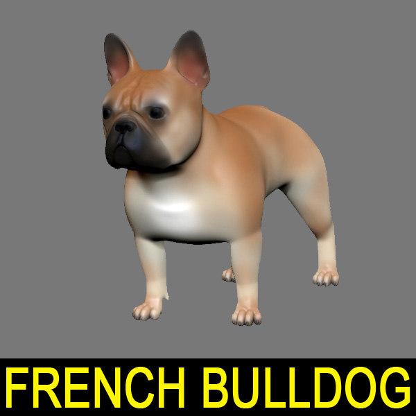 lwo french bulldog