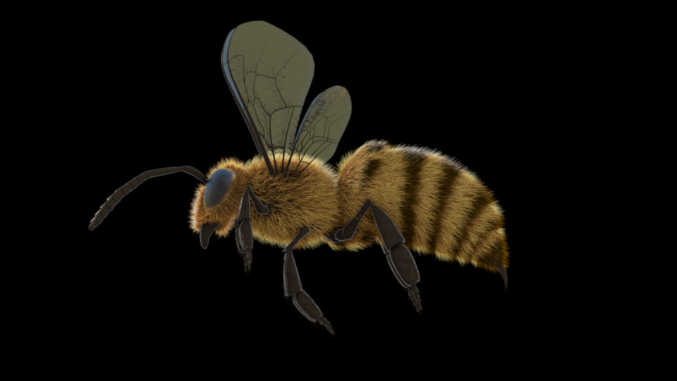 3d model of bee animation