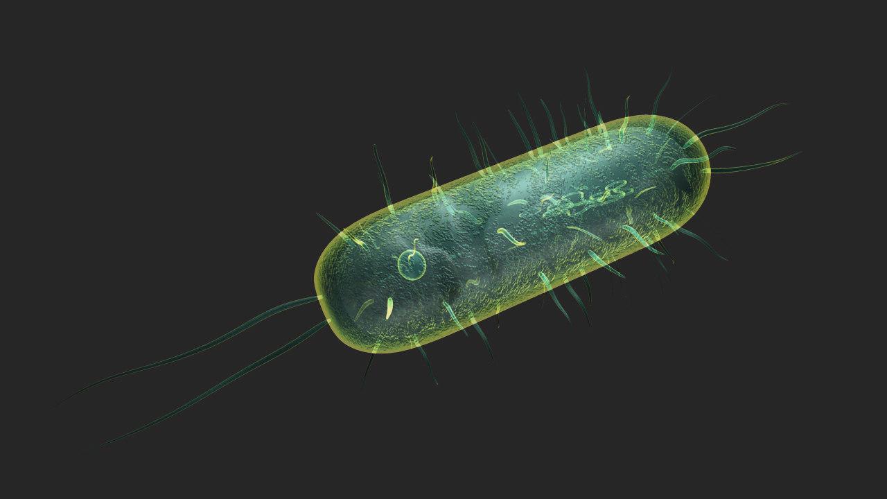 bacteria 3d obj