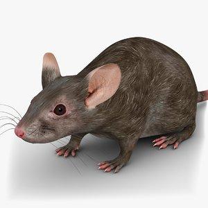 little mouse 2 3d 3ds