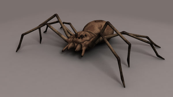 spider 3d ma