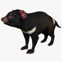 3d tasmanian devil model