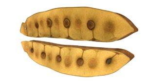 3d acacia wattle