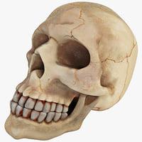 max aquarium skull