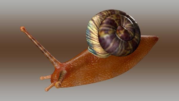 3d model of snail gastropod