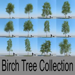 3d realistic birch trees