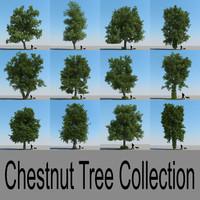 Chestnut Tree Collection