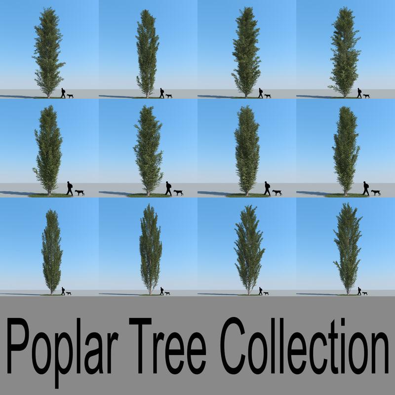 3d model realistic poplar trees