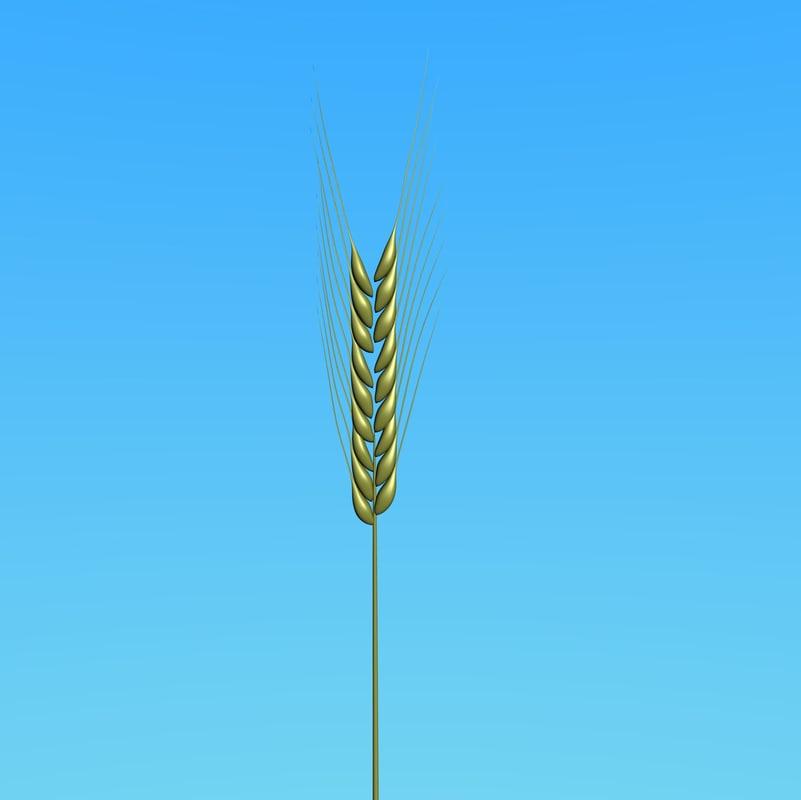 spike wheat 3d blend