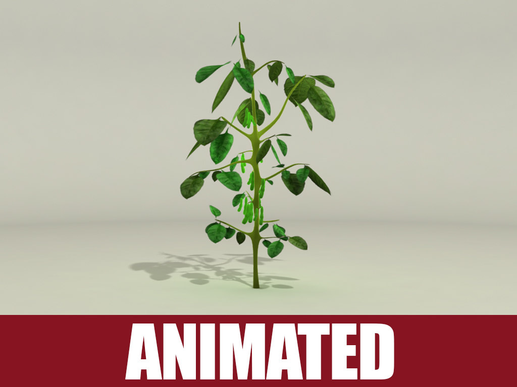 soybean plant animation 3d model