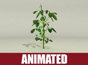soybean plant animation 3d model