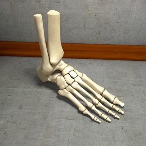 3d model human foot bone