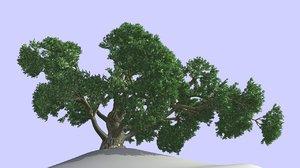 3d realistic leaf model