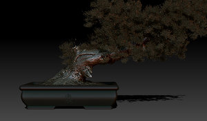 bonsai tree tanuki obj