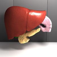 Human Inner Organs - Pancreas Liver Gall Bladder Spleen