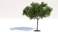 3d tree leaf 2