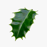 3d holly leaf