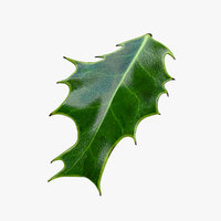 Holly Leaf C