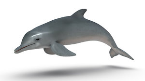 dolphins 3d obj