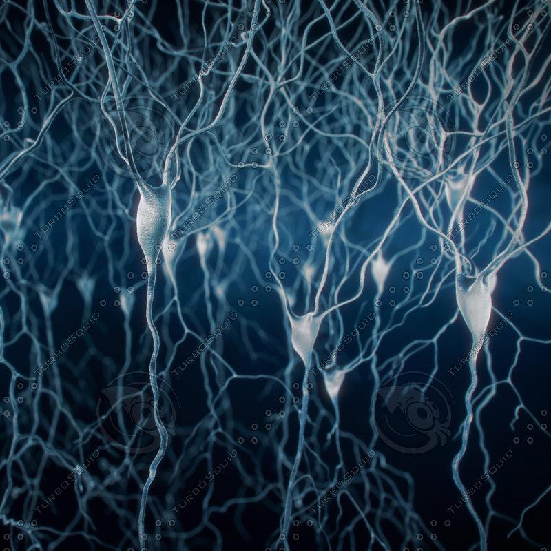 max set 5 pyramidal neurons
