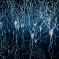 Pyramidal-Neurons set of 5