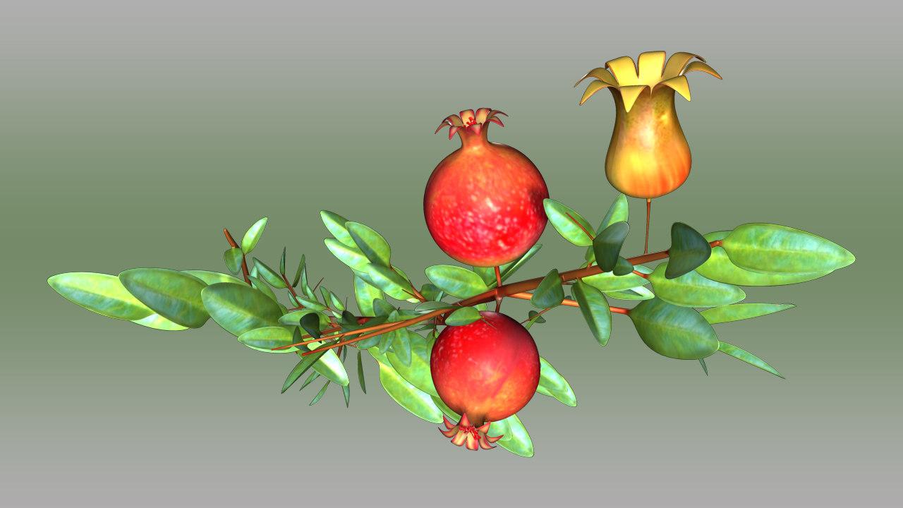 maya pomegranate