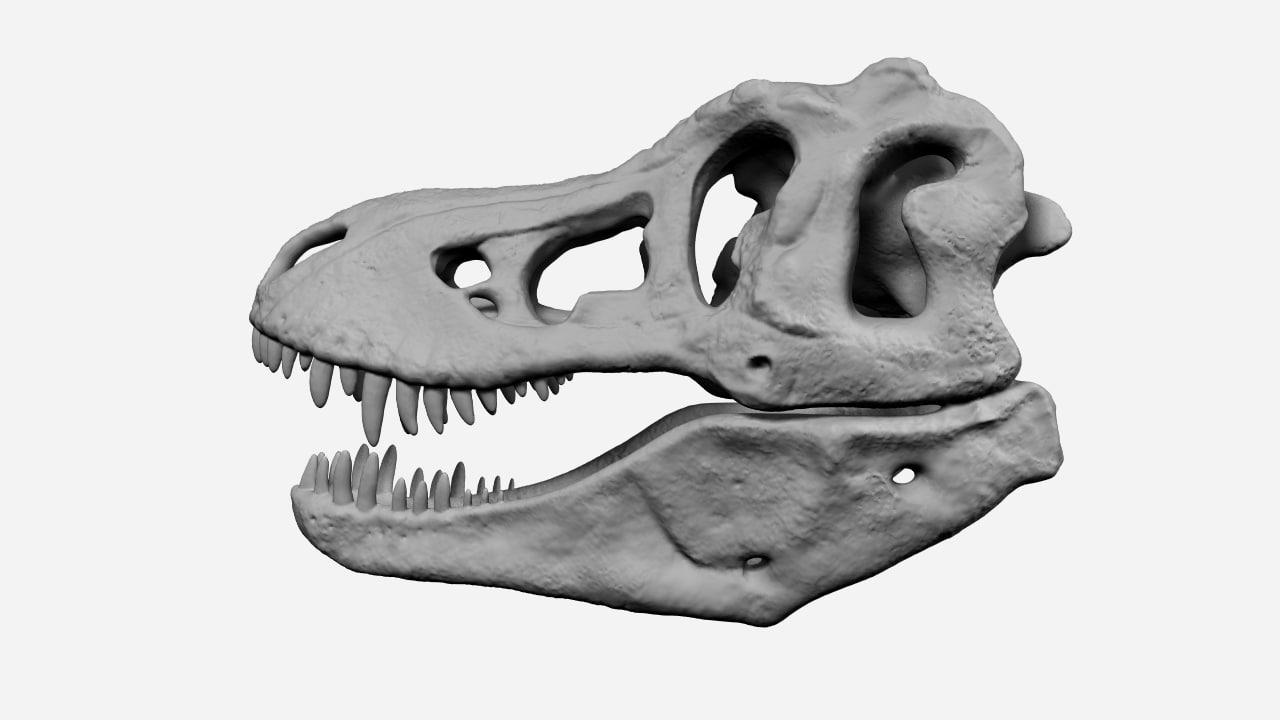 3d model t-rex skull