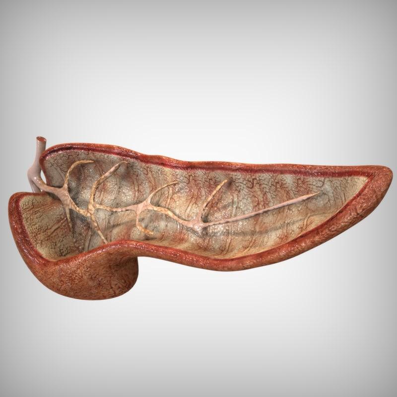 pancreas anatomy 3ds