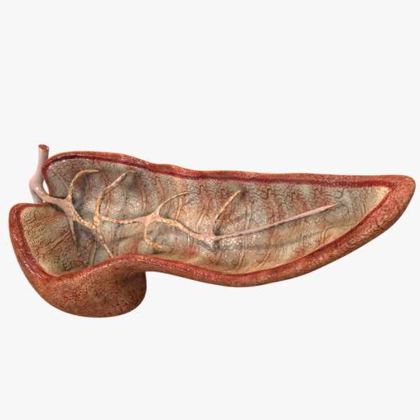 pancreas anatomy 3ds