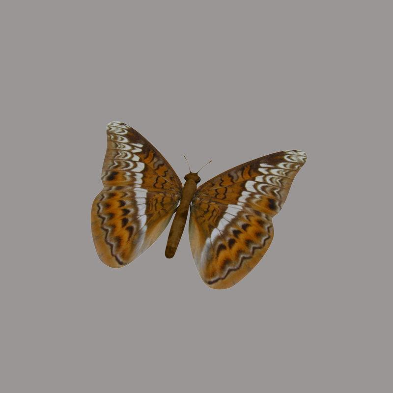 butterfly tiger 3d model