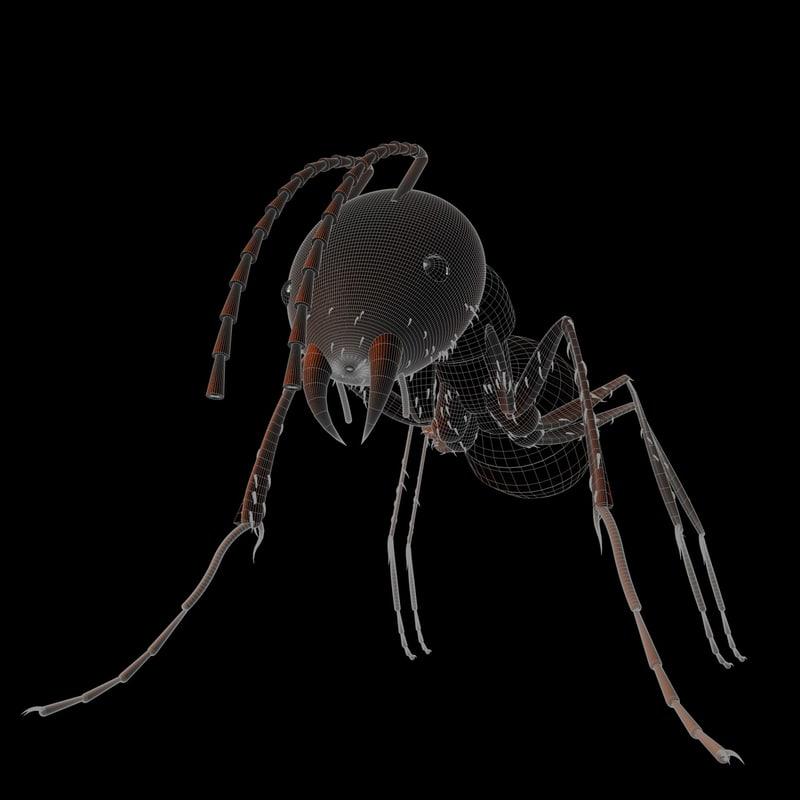 3d house ant body model