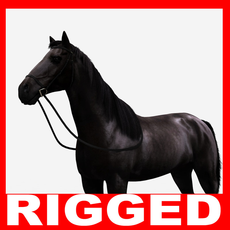 realistic horse rigged max