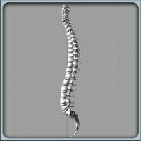 3d igs human spine