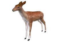 fallow deer max