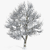 snow trees max
