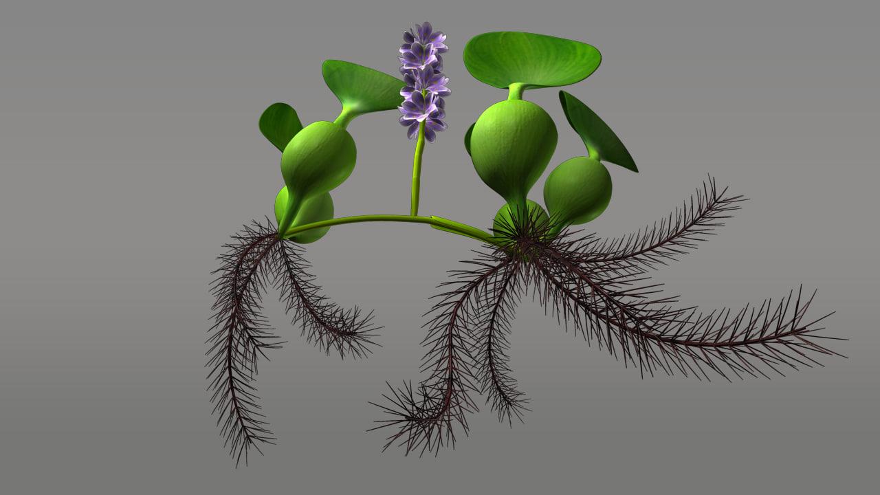 eichhornia water hyacinth obj