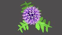 3d echinops flowering model