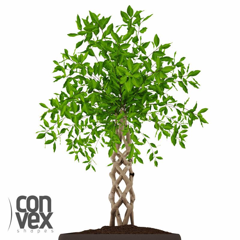 3d potted plants 13