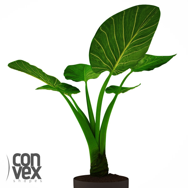 3d model potted plants 20