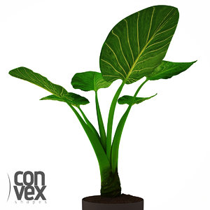 3d model potted plants 20