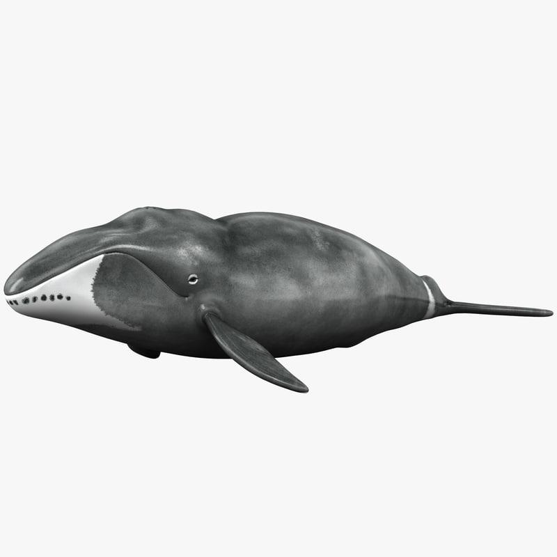 bowhead whale 3ds