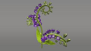 3d model heliotropium flowering