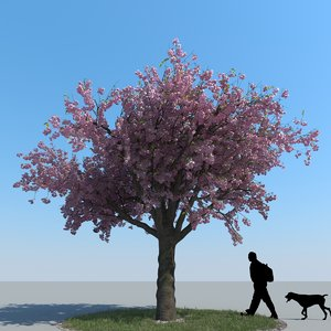 realistic cherry tree max