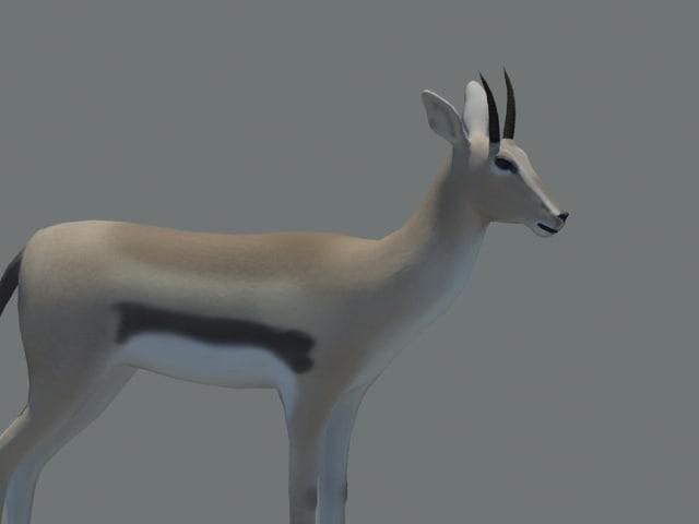 3d gazelle