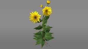 3d helianthus plants sunflower model
