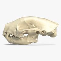Skunk Skull Scan