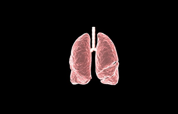3d model of lung medical