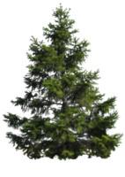 3d model 2d tree