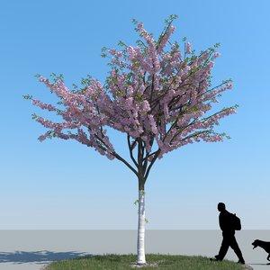 3d realistic cherry tree model