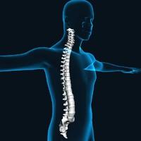 Human Spine Xray